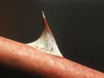 O que significa o espinho na carne de Paulo?